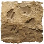 "19°21'55.04""S   13° 7'8.92""E  porcupine scatch, northern namib"