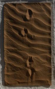 Sand gazelle, walking
