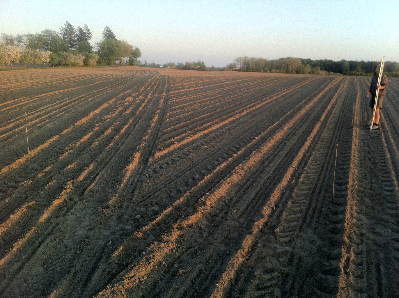 Original position of Acre in the corn field